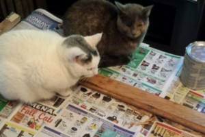 Some cats get in the way, and others like to help strip historic wood windows.